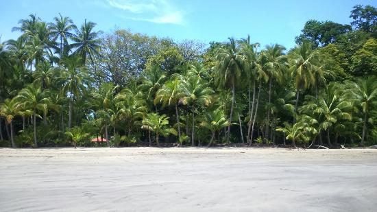 Pacific Bay Resort: Petit coin de paradis