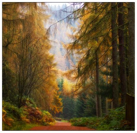 Gartmore, UK: queen elizabeth forest park