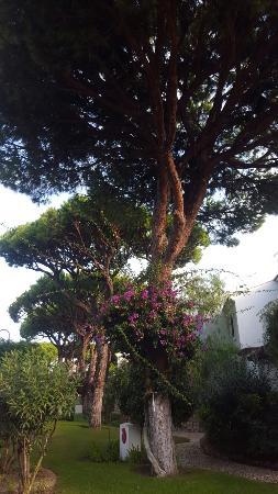 Sheraton Algarve Hotel : 20151026_085754_large.jpg