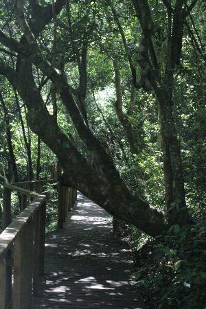 Wilderness, Südafrika: Lovely walk through the forest