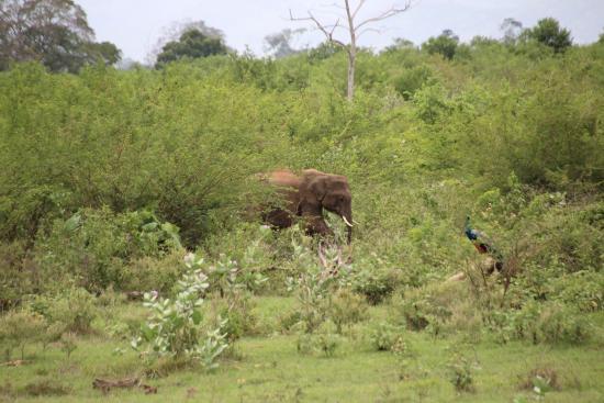 elephants of uda walawe picture of udawalawe national. Black Bedroom Furniture Sets. Home Design Ideas