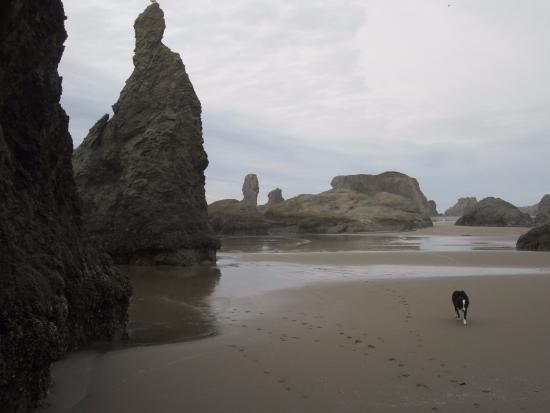 Windermere on the Beach: Dog Friendly Fall Beach Day