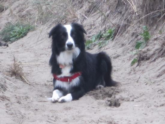 Windermere on the Beach: Four stars from my dog!