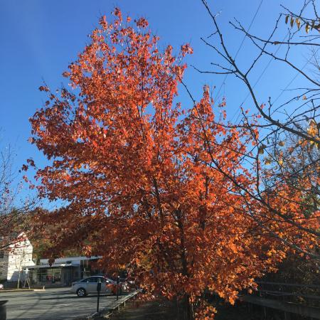 แลมเบิร์ตวิลล์, นิวเจอร์ซีย์: Fall in Lambertville