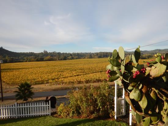 The Raford Inn Bed and Breakfast: zinfandel grapes growing just across the road
