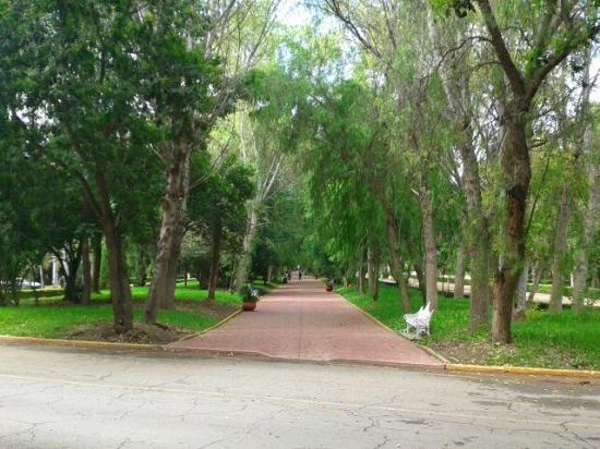 Av. De los Ilustres Ideal para caminar, trotar o correr