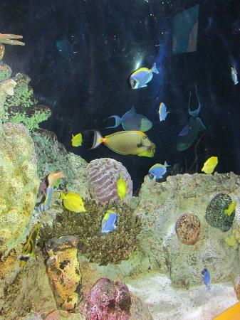 Adventure Aquarium Picture Of Adventure Aquarium Camden