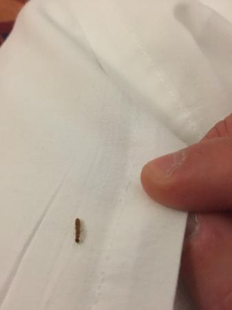 Econo Lodge Statesman Ararat: Close up termite