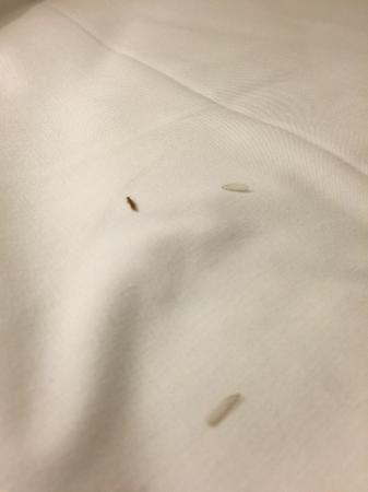 Econo Lodge Statesman Ararat: Termites & wings