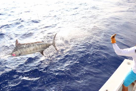 High Noon Sport Fishing : Frisky Marlin
