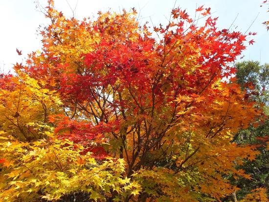 Fukuchi Sanroku Hana Park