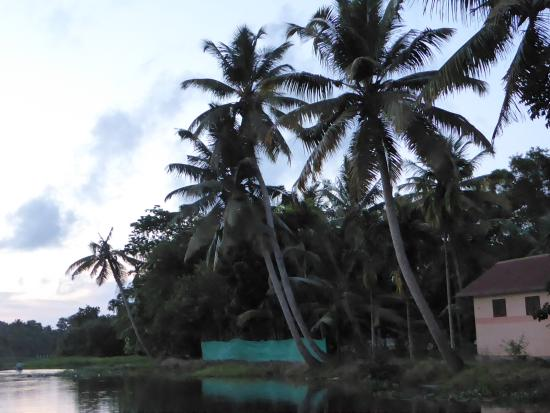 Ayana's Homestay: A peak at the Back Waters