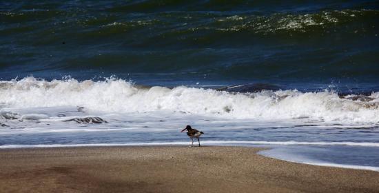 Mar Azul, Argentine: Ave de pico rojo