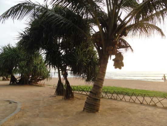 An evening view of Bentota Beach