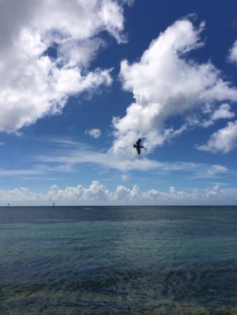 Aruba Beach Chalets : photo1.jpg