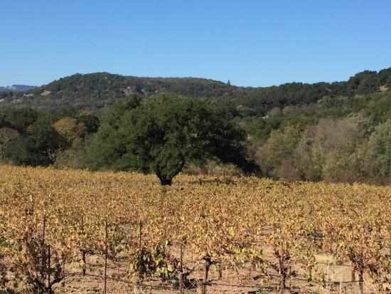 Bartholomew Park Winery: photo0.jpg