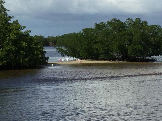 Everglades Day Safari: Gulf coast boat ride