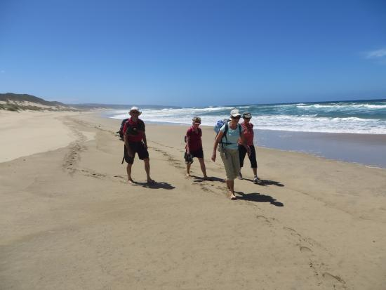 Sandpiper Guest Cottages and The Oystercatcher Trail : BEACH HIKE