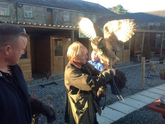 Kilmacthomas, Irlanda: Mayfield birds of prey