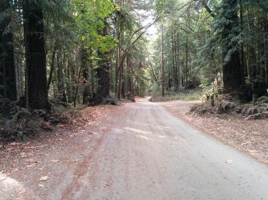 Forest of Nisene Marks State Park: Nicene marks