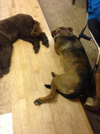 The Ship Inn: Dogs chilled out