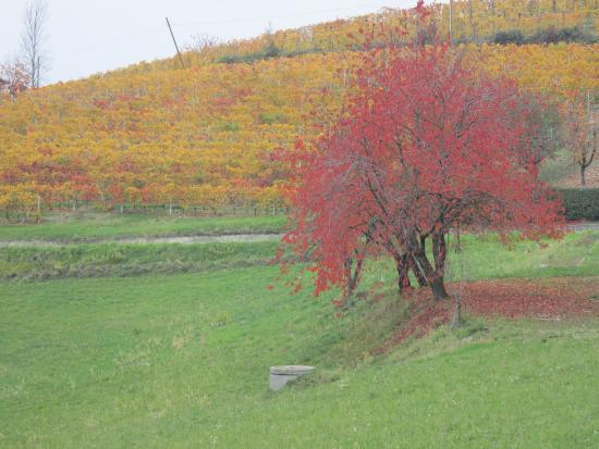 Bossolasco, Italia: le colline