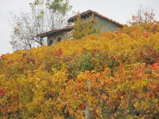 Bossolasco, Italia: aziende agricole