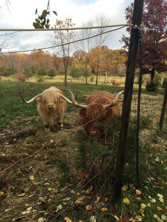 Brookfield Farm Bed & Breakfast: photo4.jpg