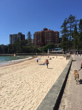 Great Beach, Great Views you can't beat Manly