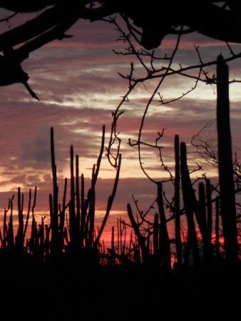 Auriga Ecolodge: Sunrise seen from the lodge