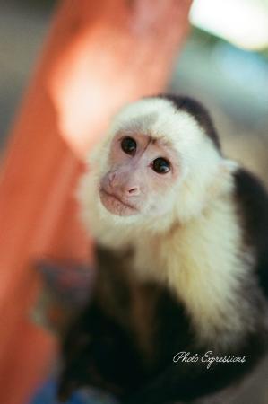 Allegro Papagayo: Monkey were everywhere