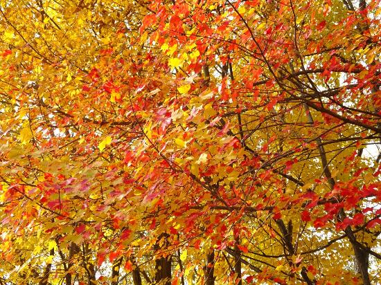 Brattleboro Common: Beautiful autumn colours