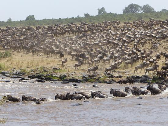 Mara West Camp: Saw two crossings