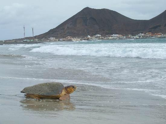 incroyable sélection aliexpress prix modéré São Vicente Tour - Calhau Beach - Picture of Cabo Verde ...