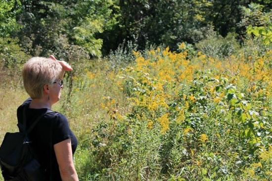 Mount Sterling, OH: Hike along the meadow, goldenrod in full bloom.