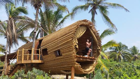 Playa Viva: Treehouse