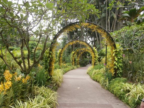 singapore botanic gardens top tips before you go with photos tripadvisor