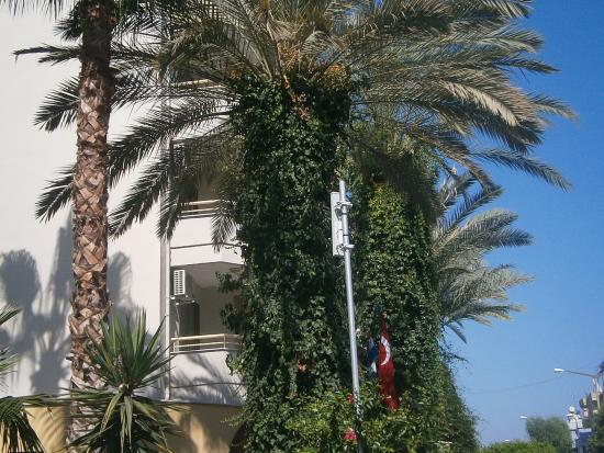 Sifalar Apart Hotel照片