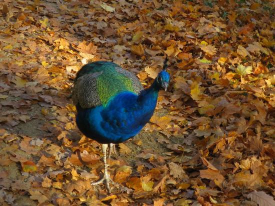 Pfaueninsel Park (Peacock Island): 20151101150052_large.jpg