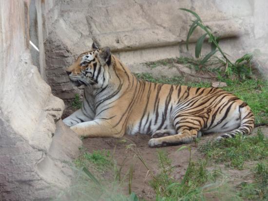 show user reviews maharajah jungle trek orlando florida