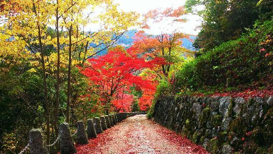 Mt. Takagi