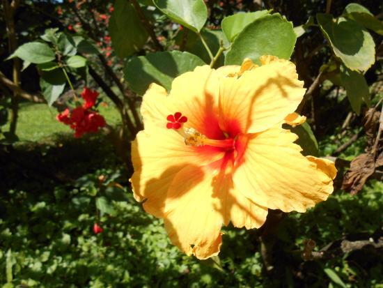 De Fleurs Photo De Jardin Botanique De Deshaies Deshaies Tripadvisor