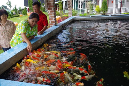 Fish Feeding Activity - Picture of 1000 Sook Food and Farm, Cha-am