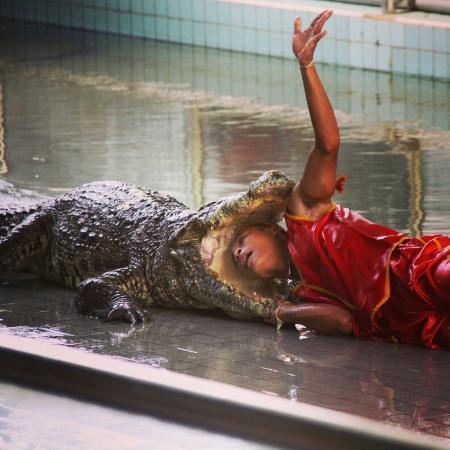 Million Years Stone Park & Pattaya Crocodile Farm ...
