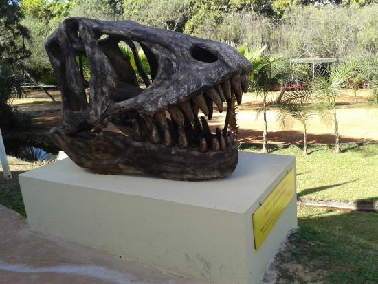 Museu Memorial do Cerrado : Réplica de um fóssil