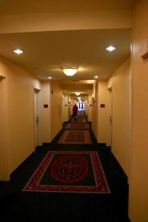 Hilton Garden Inn Amarillo: Couloir