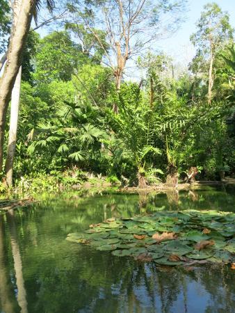 Turbaco, Colombia: Gardens