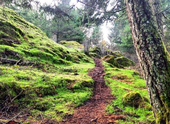 Langford, Canada: Hiking up the north route of Mount Finlayson.