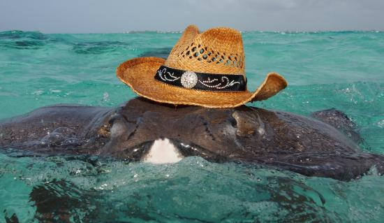 Cayman Luxury Charters Ltd.: There's a new sheriff in town