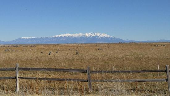 Monte Vista National Wildlife Refuge : 1031151439_large.jpg